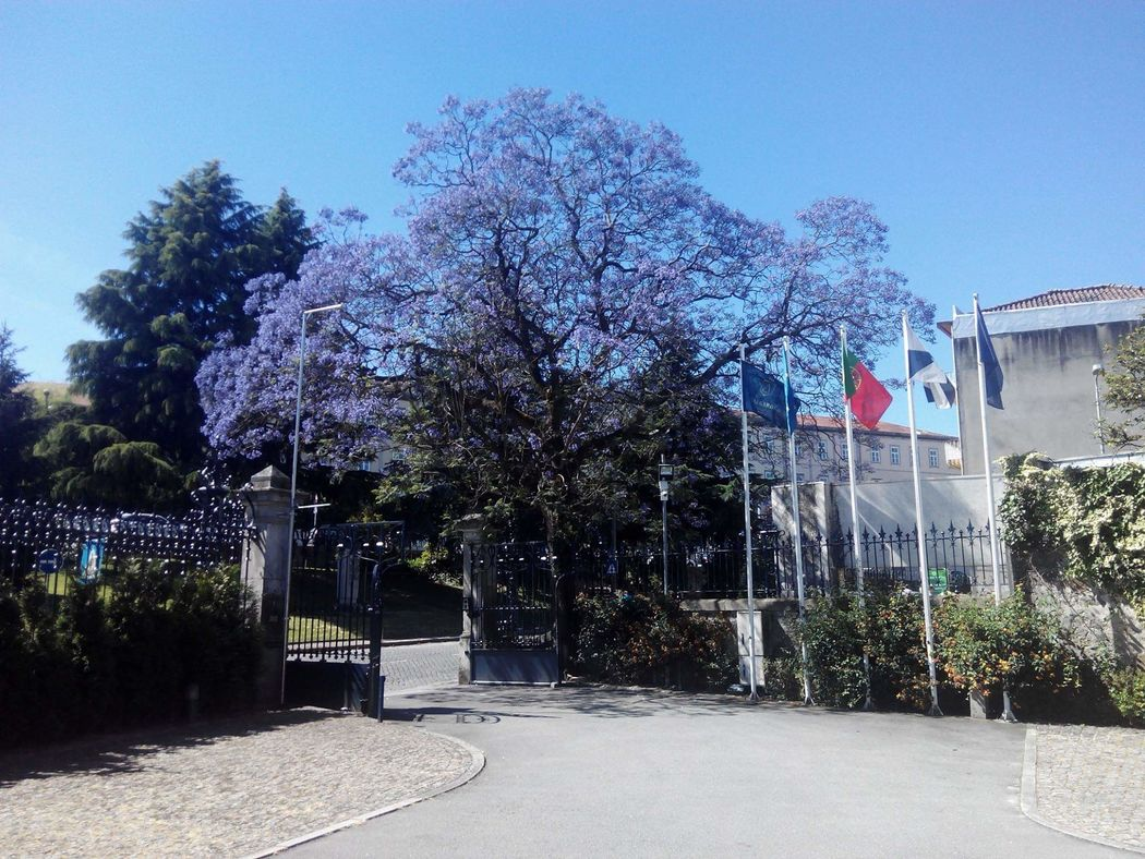 Villa Garden Braga