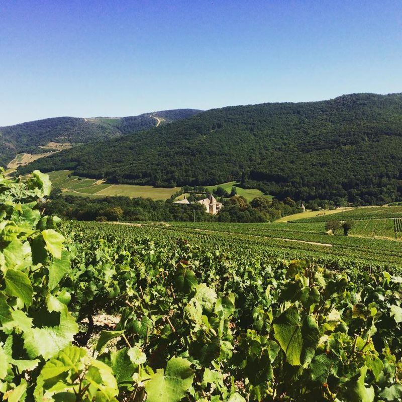 Le château de Varennes, vignes