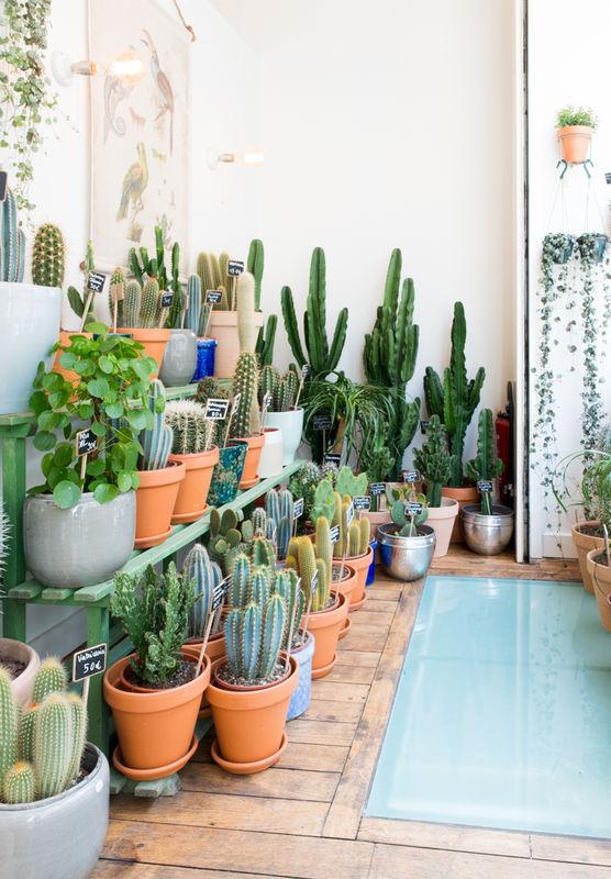 Le cactus club