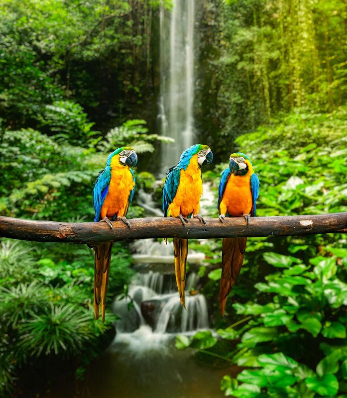 Costa Rica 10 noches.Precio por persona desde 920€.solicita mas informacion.