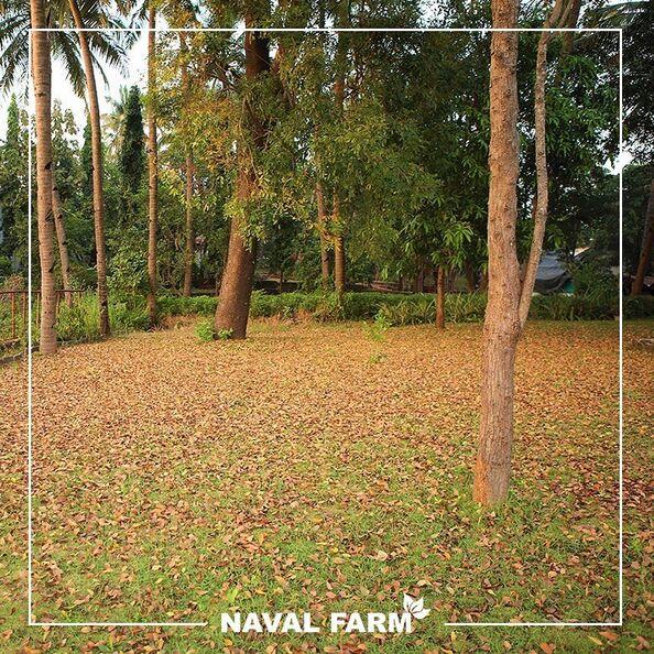 Naval Farm