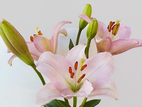 Der Renner - Blumenversand und Service