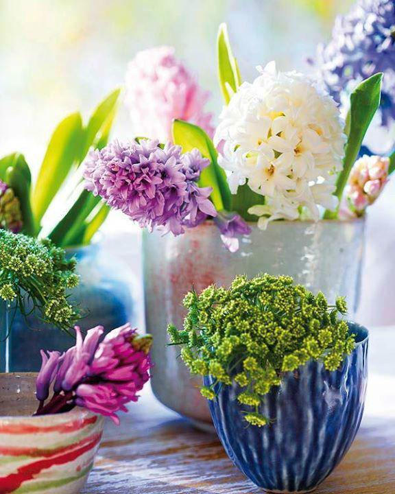 Azalia Flores y Eventos