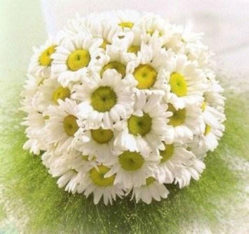 Blumen Luger