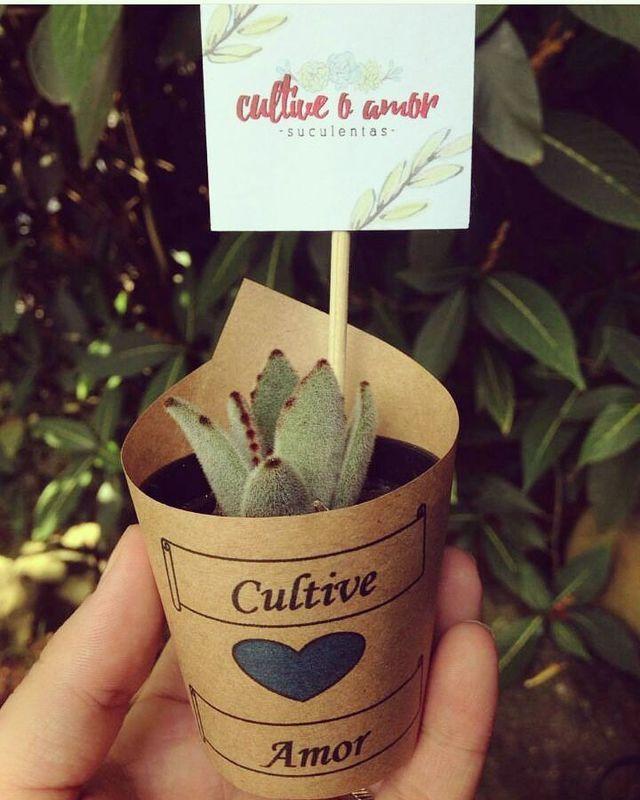Suculentas Cultive o Amor