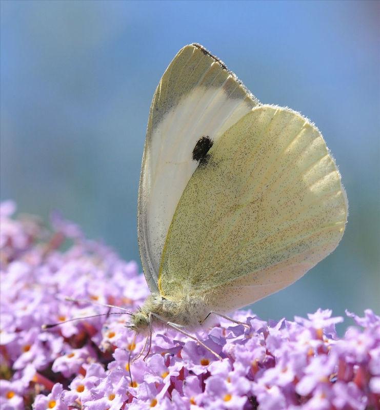 Beispiel: Die etwas andere Hochzeitstradition, Foto: Schmetterlingszauber.