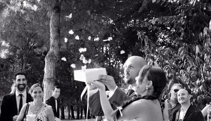 Mariposas para bodas