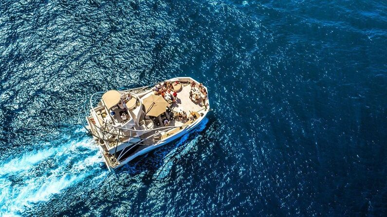 Pelican Cabo