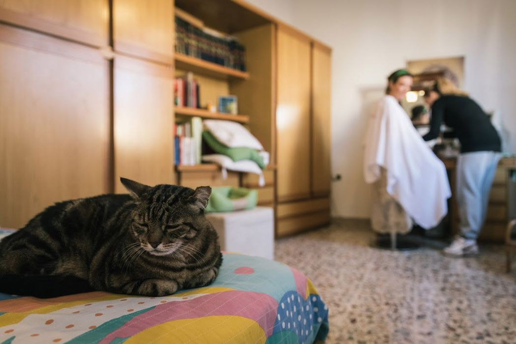 Il gatto della sposa