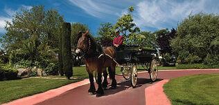 Finca Los Arcángeles, coche de caballos