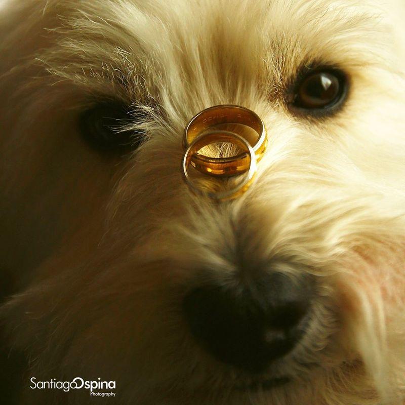 Lucaso Fotografía: Foto de anillo sin retoque  Fotografía: Santiago Ospina