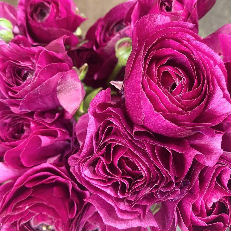 Véronique Fleurs