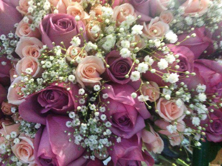 Distribuidora de Rosas