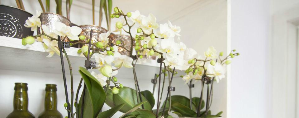 Beispiel: Ladenimpressionen, Foto: Claudia Reitinger - Florale Gestaltung.