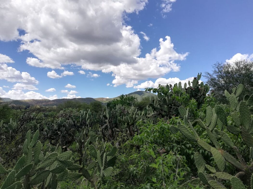 Jardín Suré by Complejo Inda Jani