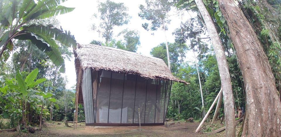 Tanimboca