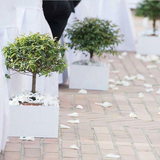 Belinsk - Wedding Planners