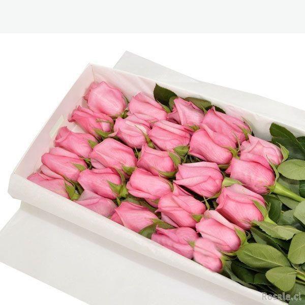 El Jardín de Rosas SpA