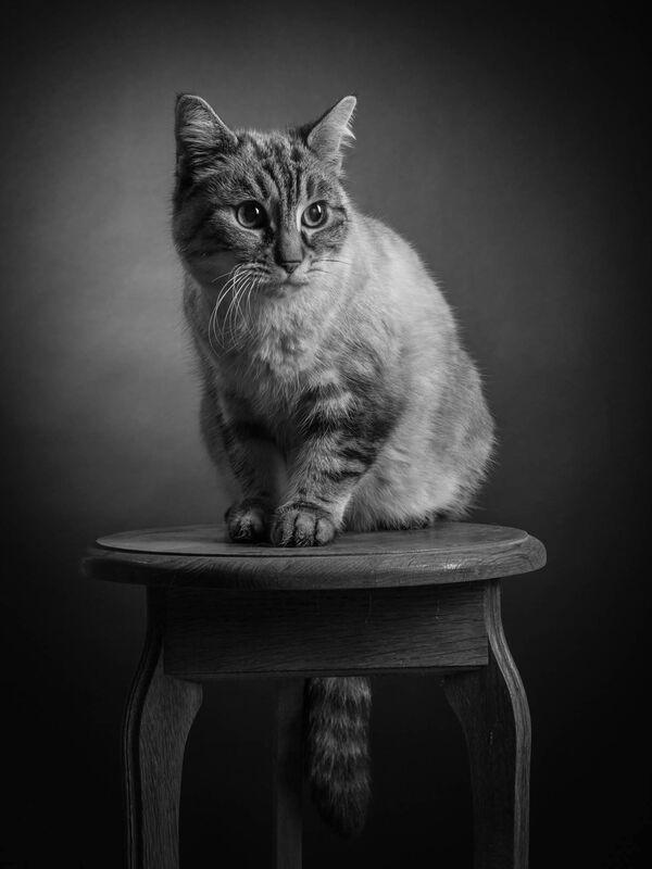 Patrick Godde Photographie