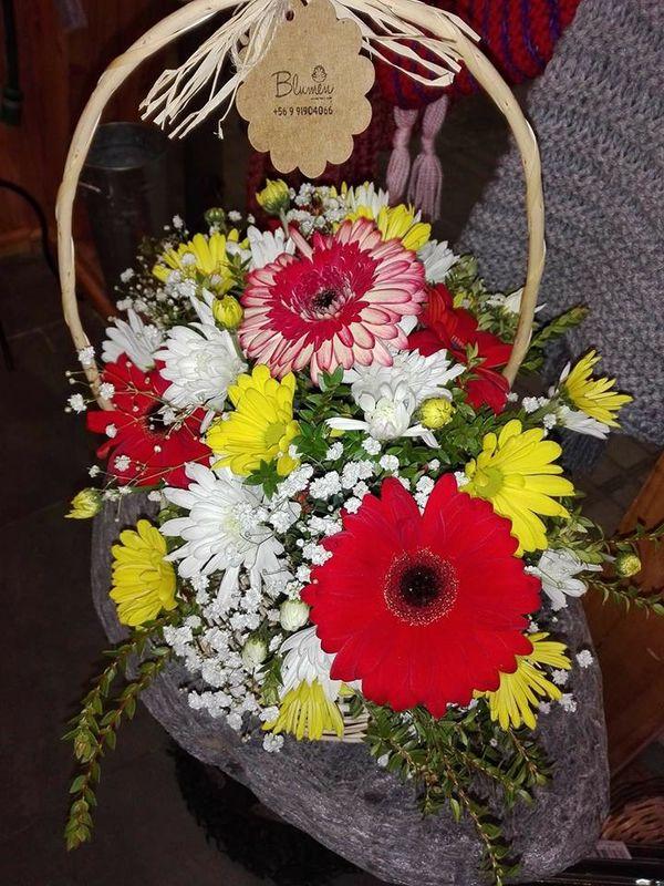 Blumen Puerto Montt
