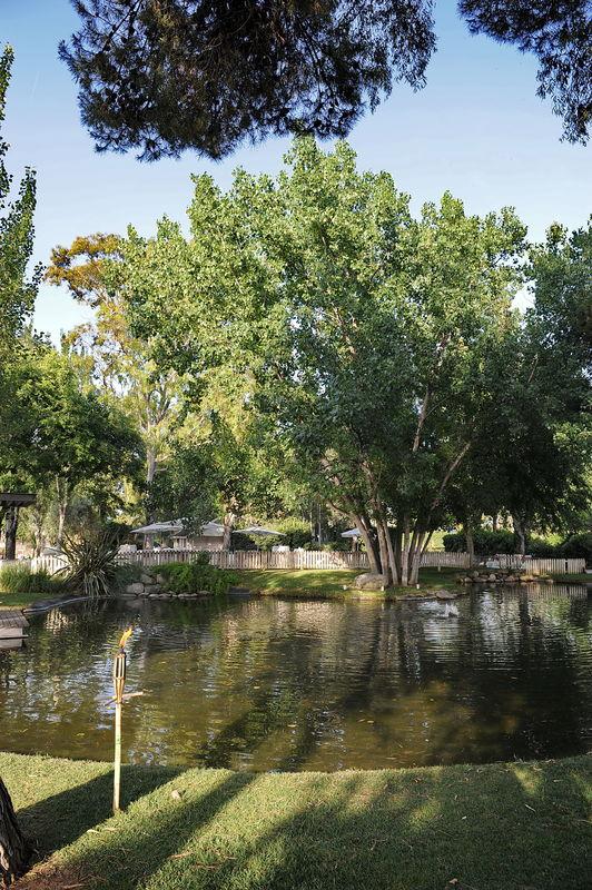 El jardí de les Palmeres
