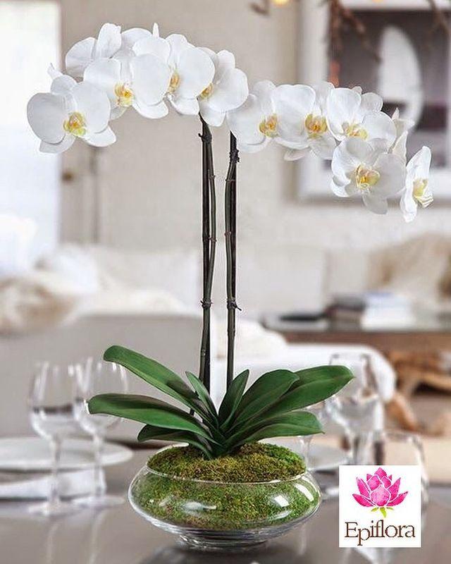 Epiflora Orquídeas