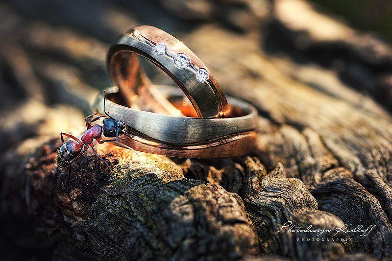 Beispiel: Liebevolle Detail-Fotografie, Foto: Photodesign Radloff.