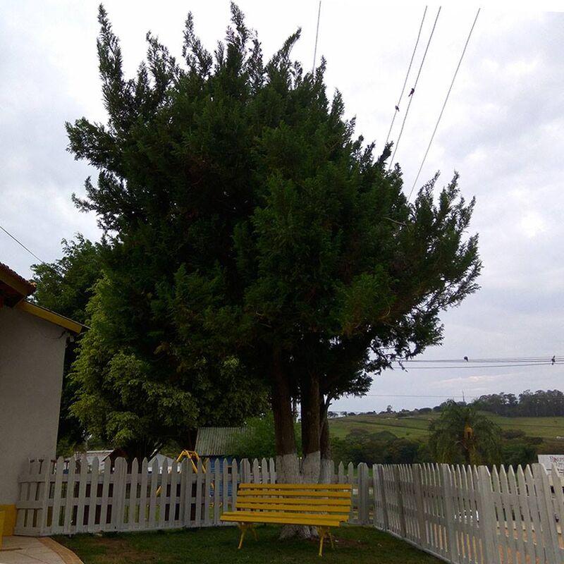 Churrascaria Bonfante