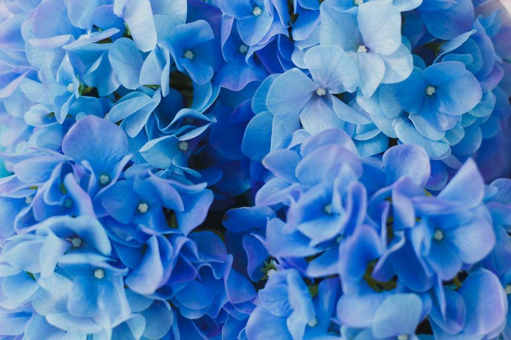 Real Touch - цветы из сенсорного латекса