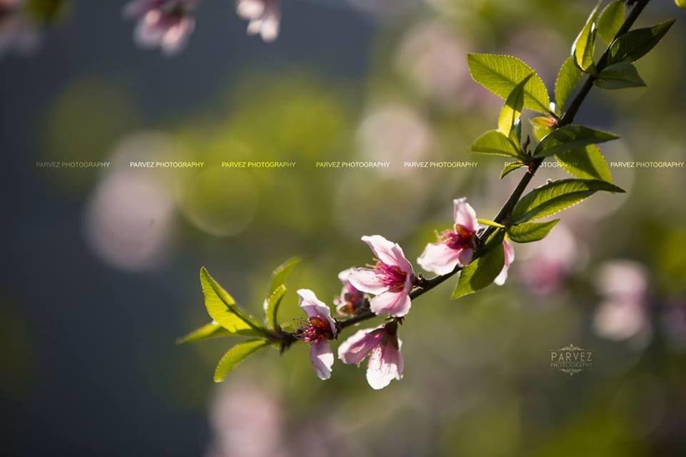 Parvez Photography