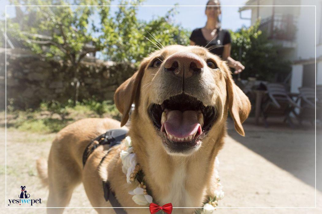 Un perro feliz en la boda de sus humanos