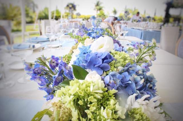 Malva Casa Floral