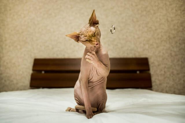 Свадебный фотограф Елена Оськина