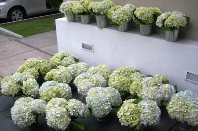 Florería Kirei