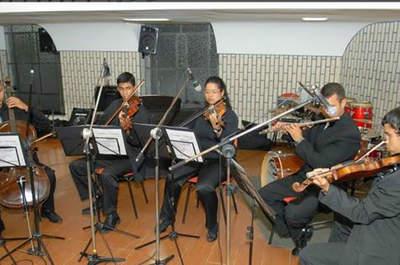 Violinos Veneza