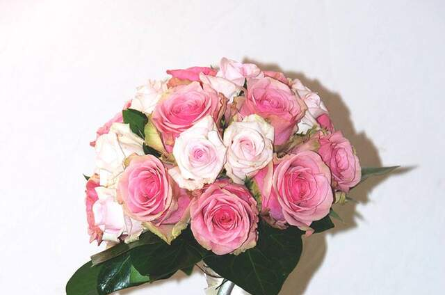 Alberto Francia Floristas
