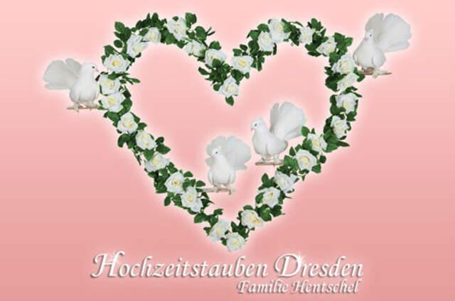 Hochzeitstauben Dresden®